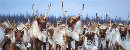 Land of a Thousand Deer