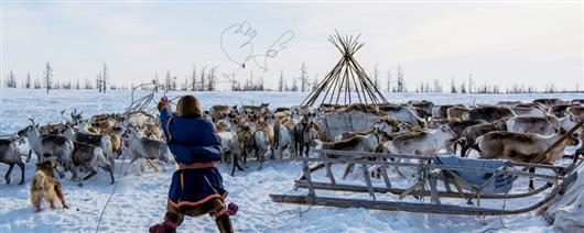 Reindeer herder's day