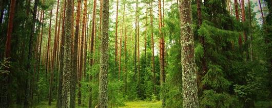 Велотур Воронежский лес